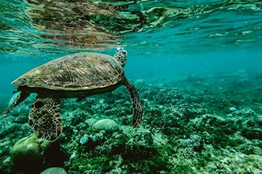 Hassyan Marine and Environmental Surveys