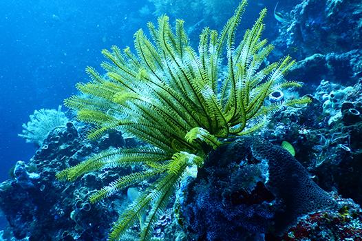Jazan Marine Ecological Surveys 1